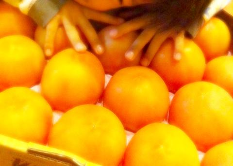 121117_TomatoShiokoji4.jpg