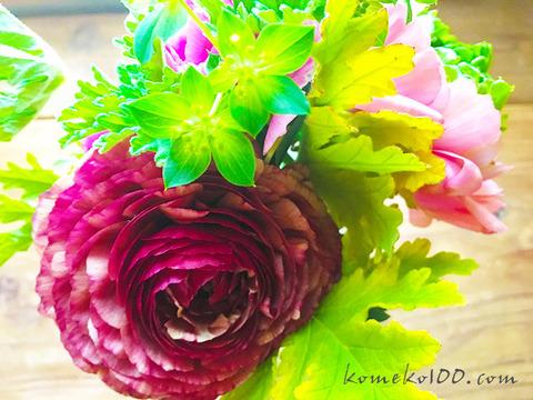 170222_flower_ceyron.jpg